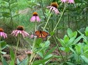 Pollinator pic 2 (2)